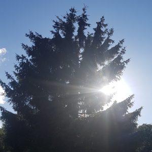 #naturehealing ZIJNSmeditatie in de rijke overvloedige bossen van Lage Vuursche @ Bilthoven | Utrecht | Nederland